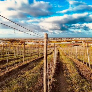 In the vineyard at sunset: Wine Experience